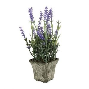 lavendar decorative plant in pot 25cm